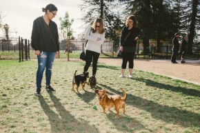 Not in My Backyard: Residents Growl About Proposed Dog Park