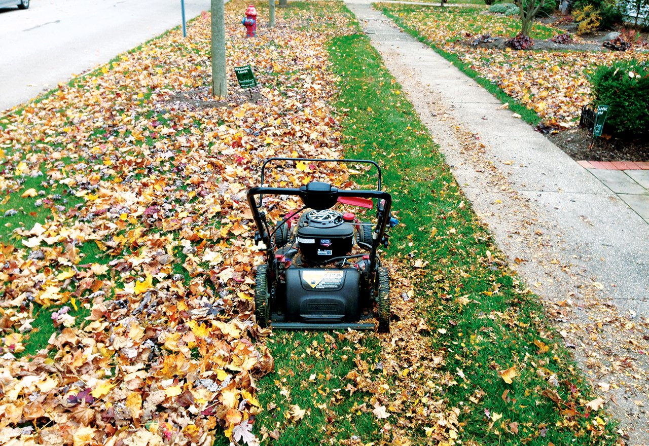 Mulch Mowing Leaves Before