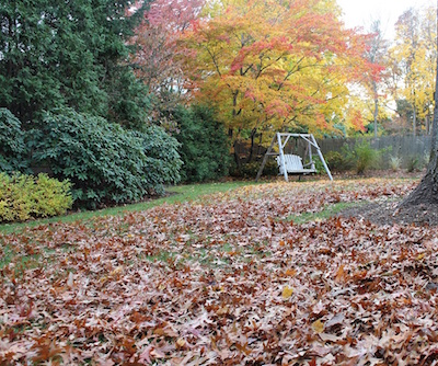 Leaf Mulch Mowing Before